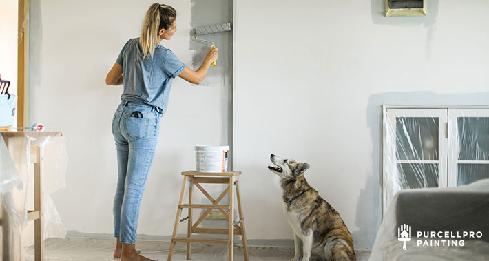 how to paint your home with pets around | Purcellpro Painting | Willow Grove PA Painter Services